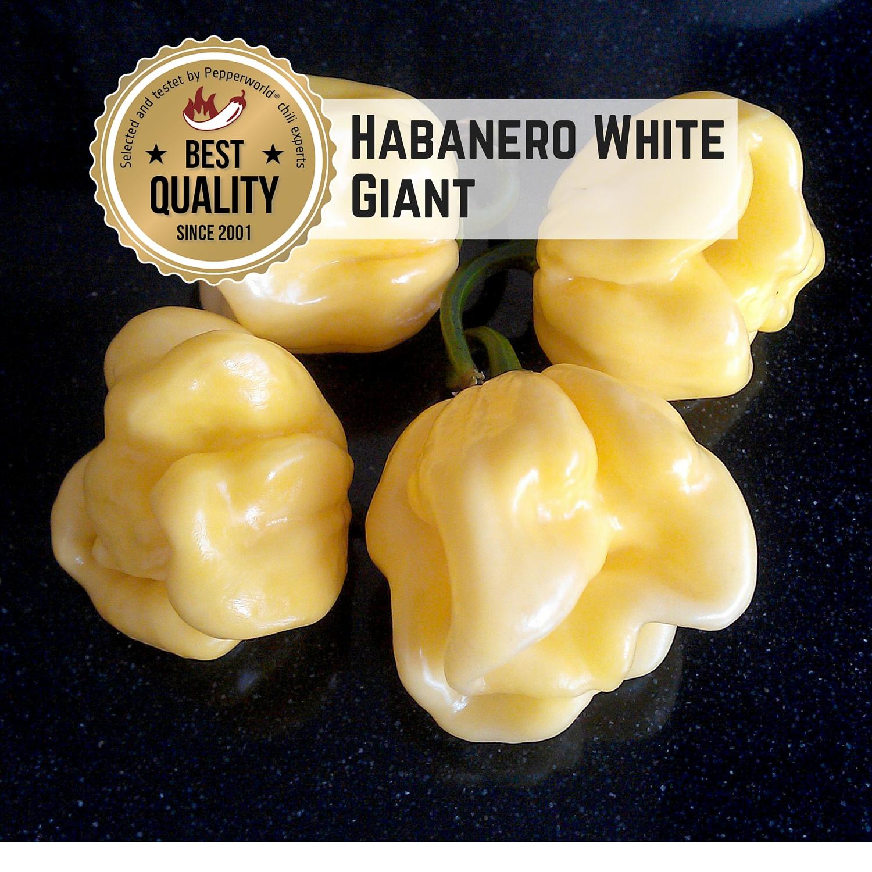 Habanero White Giant Chilli Samen