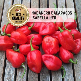 Habanero Galapagos Isabella Red Chilisamen