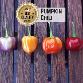 Pumpkin Chili Chilisamen