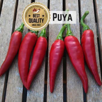 Puya Chilisamen