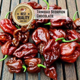 Trinidad Scorpion Chocolate Chilisamen