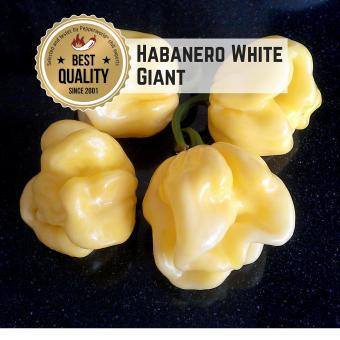 Habanero White Giant Chilisamen