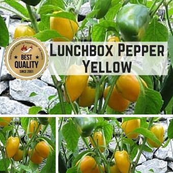 Lunchbox Pepper YELLOW Paprikasamen