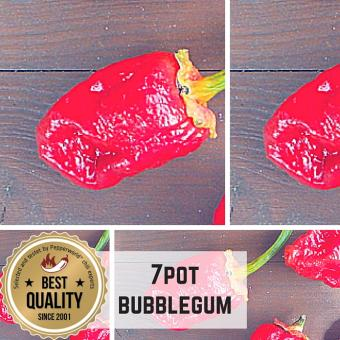 7 Pot / Seven Pot Bubblegum Chilipflanze
