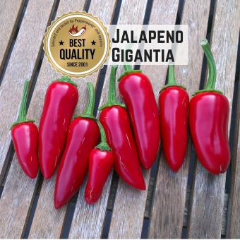 Jalapeño Gigantia Chilisamen