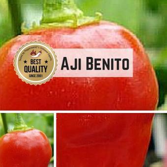 Aji Benito Chilipflanze