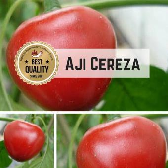 Aji Cereza Chilipflanze