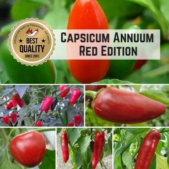 Capsicum annuum Pflanzen-Power-Pack