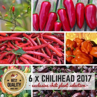 Chili Pflanzen 6er Chilihead Pflanzen-Power-Pack