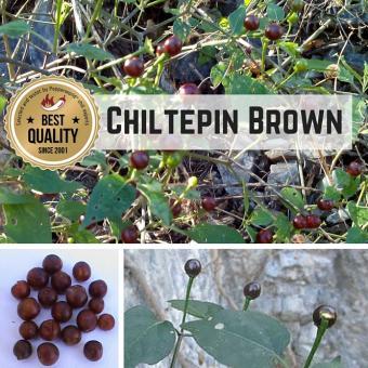 Chiltepin Sonora Brown Chilisamen