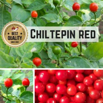 Chiltepin Sonora Red Chilisamen