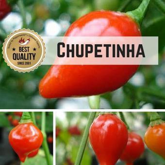 Chupetinha Chilipflanze