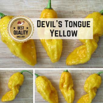 Devil's Tongue Yellow Chilipflanze