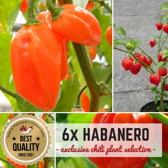 HABANERO CHILIS Pflanzen-Power-Pack