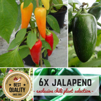 JALAPENO MAL SECHS Pflanzen-Power-Pack