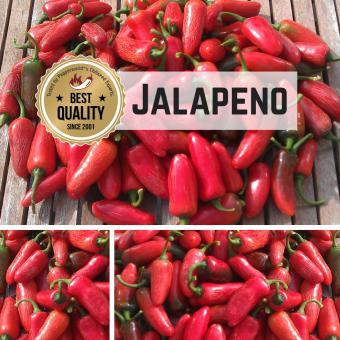 Jalapeno Chilipflanze