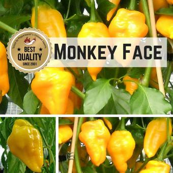 Monkey Face Chilipflanze