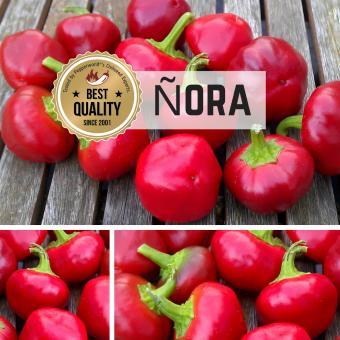 Nora Chilipflanze