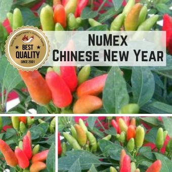 NuMex Chinese New Year Chilipflanze
