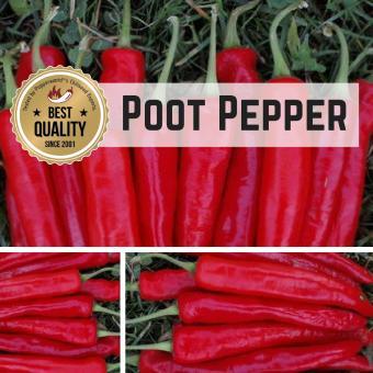 Poot Pepper Chilipflanze
