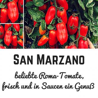 San Marzano Tomatensamen (Saucentomate)