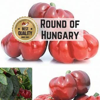 Round of Hungary Chilisamen