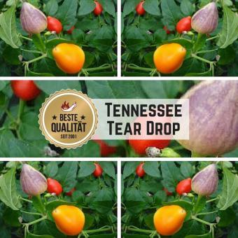 Tennessee Tear Drop Chilisamen
