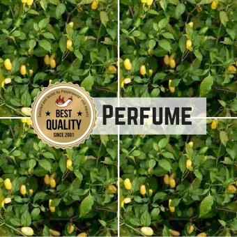 Perfume Chilisamen
