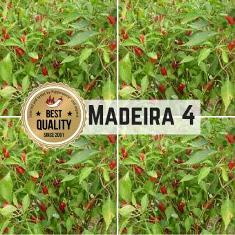 Madeira #4 Chilisamen