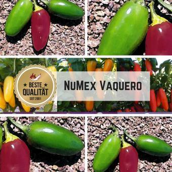 Jalapeno NuMex Vaquero Chilisamen