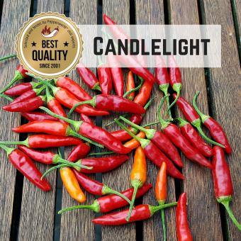 Candlelight Chilisamen
