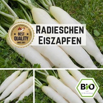Radieschen (Eiszapfen) Samen