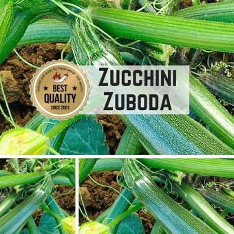 Zucchini (Zuboda) Samen