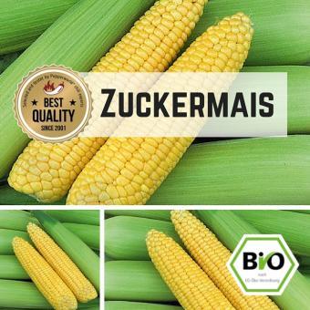Zuckermais (Golden Bantham) Samen