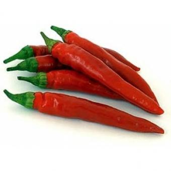 Red Rocket Chilisamen
