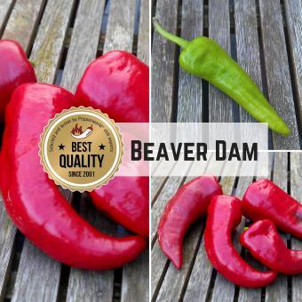 Beaver Dam Chilisamen