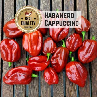 Habanero Cappuccino Chilisamen