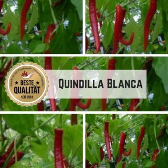 Quindilla Blanca Chilisamen