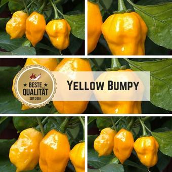 Yellow Bumpy Chilisamen