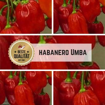 Habanero Umba Chilisamen