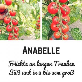 Anabelle Tomatensamen (Cocktailtomate)