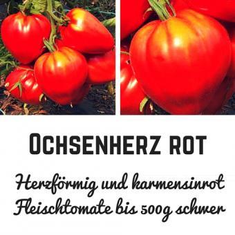 Ochsenherz Tomatensamen (Fleischtomate)