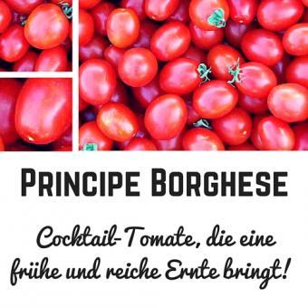 Principe Borghese Tomatensamen (Cocktailtomate)