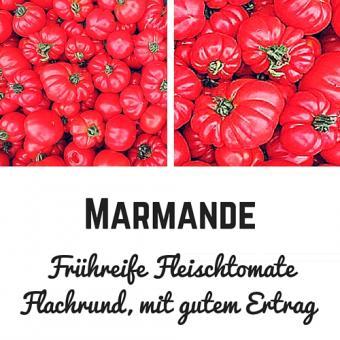 Marmande Tomatensamen (Fleischtomate)