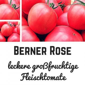 Berner Rose Tomatensamen (Fleischtomate)
