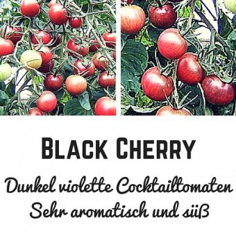 Black Cherry Tomatensamen (Cocktailtomate)