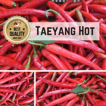Taeyang hot Chilipflanze