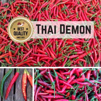 Thai Demon Chilipflanze
