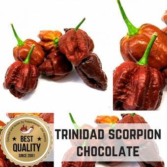 Trinidad Moruga Scorpion Chocolate Chilipflanze