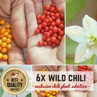 WILDSORTEN CHILIS Pflanzen-Power-Pack